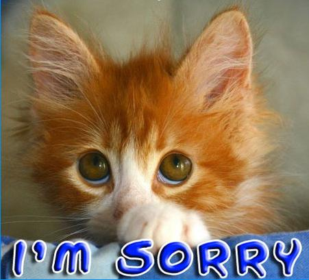 cat apology
